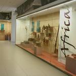 L'Alca - Museo e Biblioteca comunali di Maglie