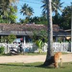 Kumari Guesthouse with one of the local cows