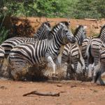 Ekala Eco Tours - Day Tours
