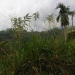 Trip to the Singharaja Rainforest