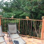 Squirrel monkeys on our balcony