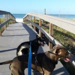 Walk across Gulf Blvd right to beach!