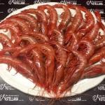 Gamba roja de Huelva