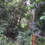 Calico Jack's Belize Jungle Canopy and Zip Lining Foto