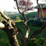Photo of Agriturismo Il Borgo Degli Ulivi