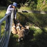 Rocky the deer; the St Bernard puppies; and the view from The River Retreat...