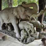 Il giardino degli elefanti