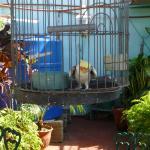 Perruche sur la terrasse
