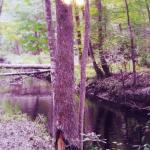 Great Swamp Sanctuary