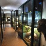 corridoio Museo Archeologico