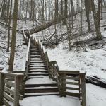 Sanctuary Woods Foto