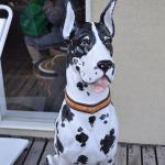Dog (back door).
