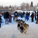 Start of the Yukon Quest Dog Sled Race, downtown Fairbanks.