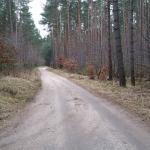Beim Waldspaziergang