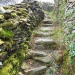 just up behind the Central, you'll find moss & lichen covered walls