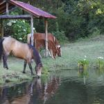 Horses by the trout pond