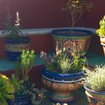 Potted plant display. Just one of many special demonstration gardens