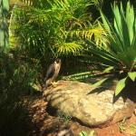 The peregrine falcon in the gardens