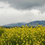 Photo de Heladeria Artesanal Aluen Patagonia
