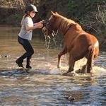 Les cavaliers d'Aléria – Linguizzetta
