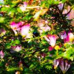 Foto de Hummingbird Beach Resort