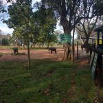 Udawalawa Elephant Orphanage