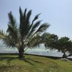 Foto de Tijara Beach