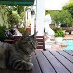 Viktoria, die anhängliche Hauskatze ist oft die Nähe