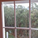 Vista hacia un precioso bosque en la parte trasera del hotel.