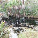 Foto de Alligator Creek Preserve