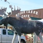 Moose are hard to miss since Walden is the Moose Capital of Colorado