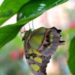 Botania - Botanical Garden and Tropical Butterfly Garden