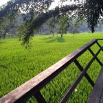 View from Paddy villa....