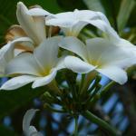 Foto de Bee Nat Garden Resort