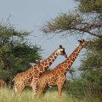 Ikweta Safari Camp Foto
