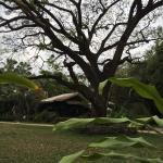 Foto de Kaomai Lanna Resort