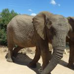 Orange Elephant Backpackers