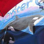 Oyster Catcher Foto