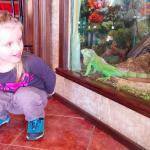 Игуана в ресторане отеля