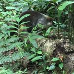 coati in the garden