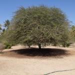Al Balid - trädgården