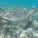 A Turtley Awesome Day at the Reef