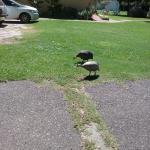 en el jardin hay animalitos hermosos, gallinas, Pavo real, y esta hermosa pareji