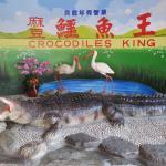 Madou Crocodiles King
