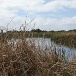 Wetland plants and bird watching blind