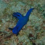 Photo de Bali Bubbles Dive Center