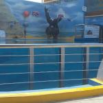 Photo of Splash Inn Nuevo Vallarta