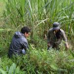 Recherches sur les espèces végétales locales pour préserver l'écosystème du bosque nublado
