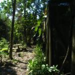 Deserted garden
