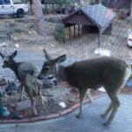 Wildlife on porch